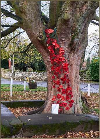 Tree poppies - by Rosedale Community Primary School