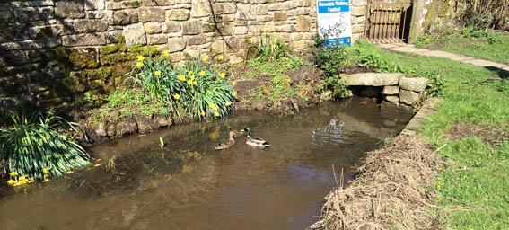 Roseale Pond