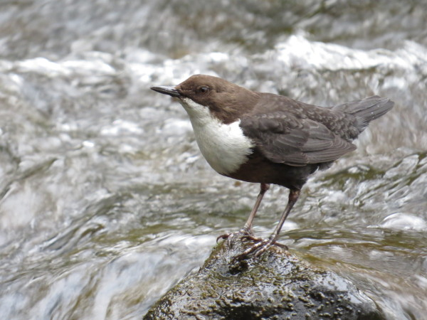 Dipper here on River Seven