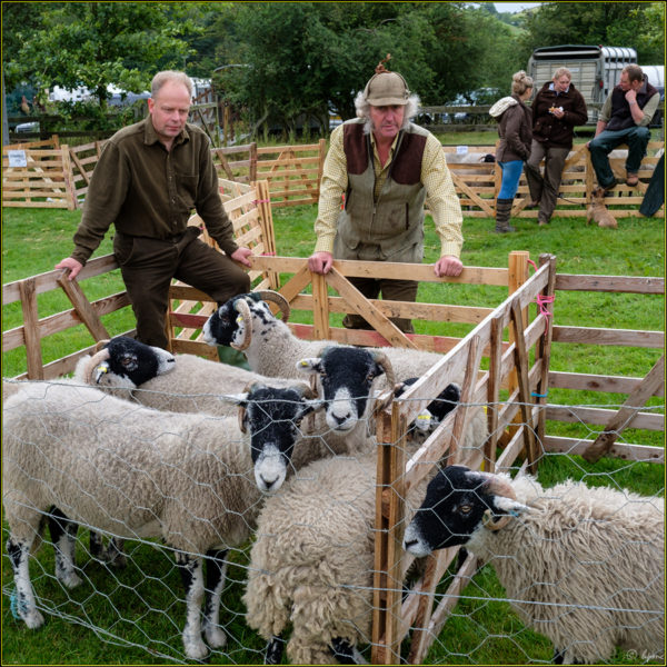 Show 2016 - Sheep Talk